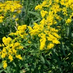 Hay fever – how to help